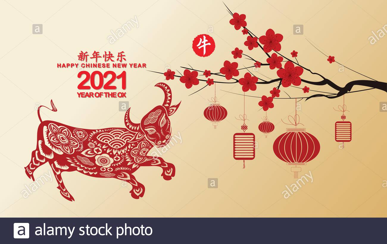 Chinese new year 2021 with blossom wallpapers Year of the Ox 1300x822