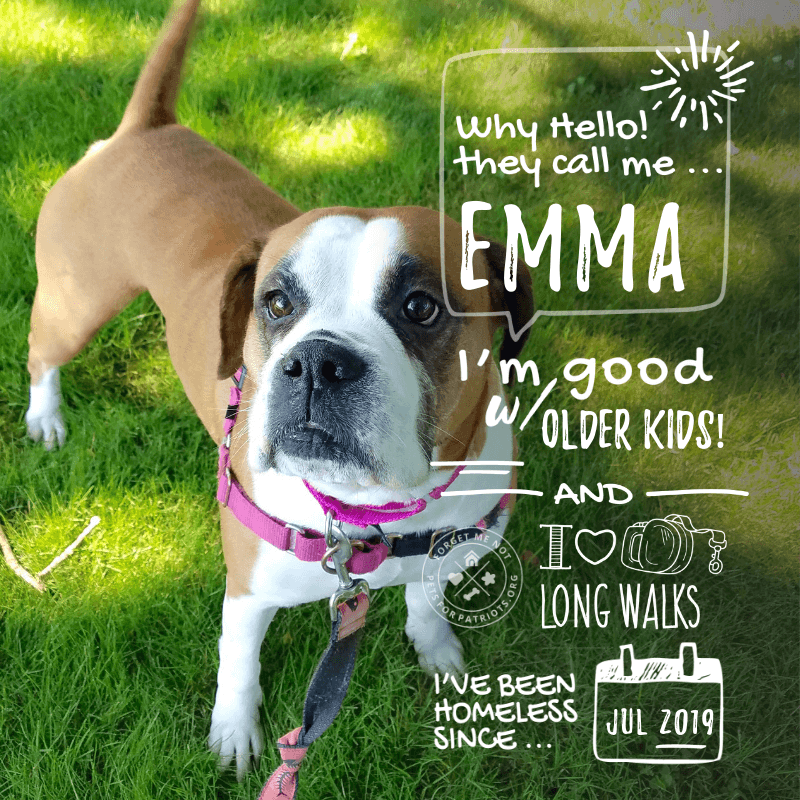 forget me not emma ma 06   Pets for Patriots 800x800