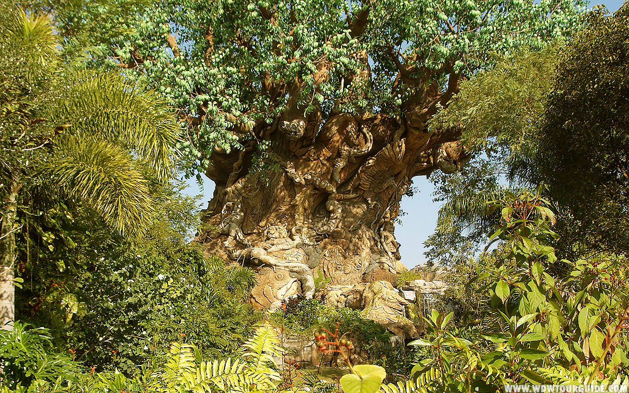 disney tree of life wallpaper
