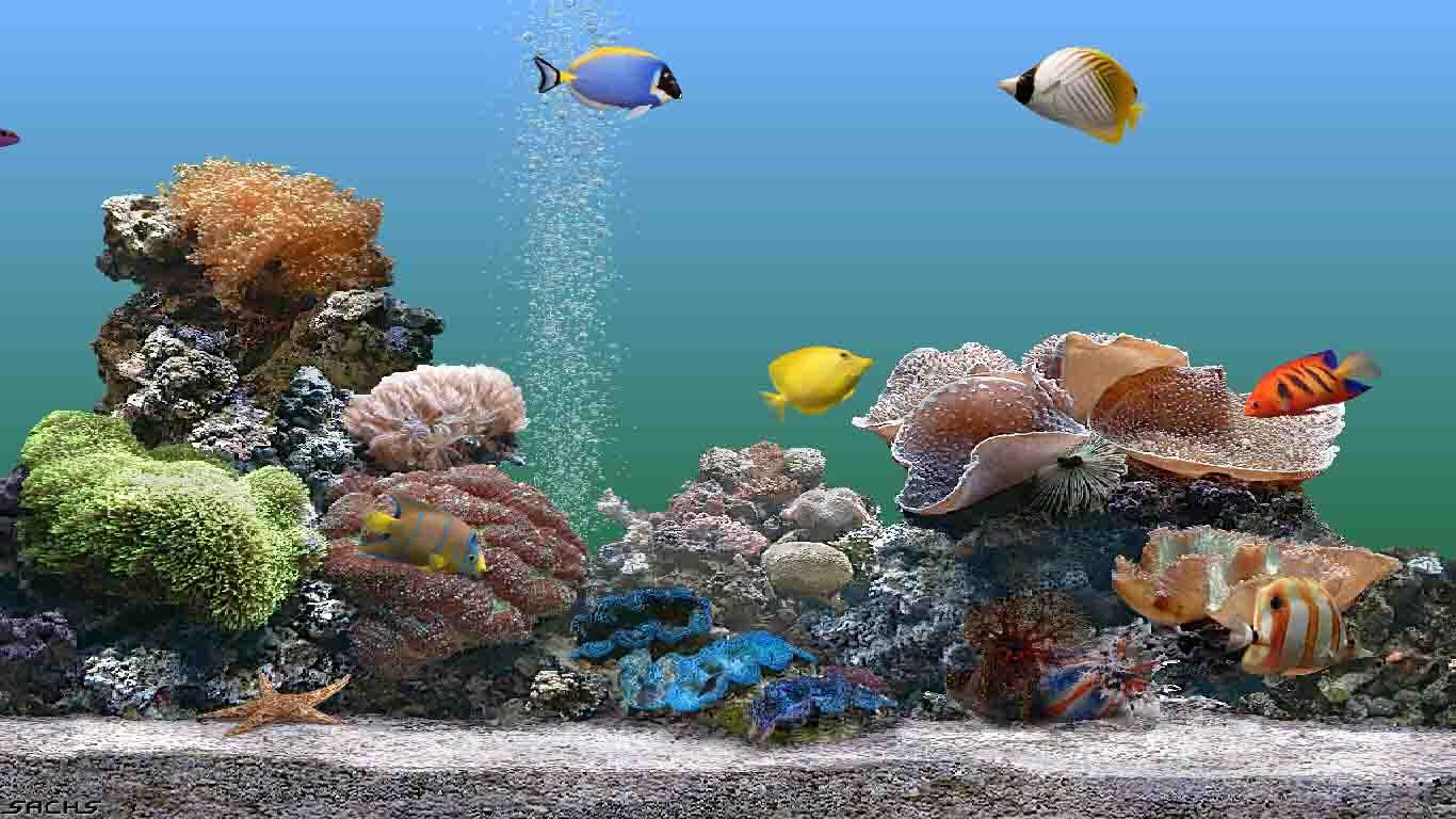 aquarium wallpapers for windows 8 wallpapersafari