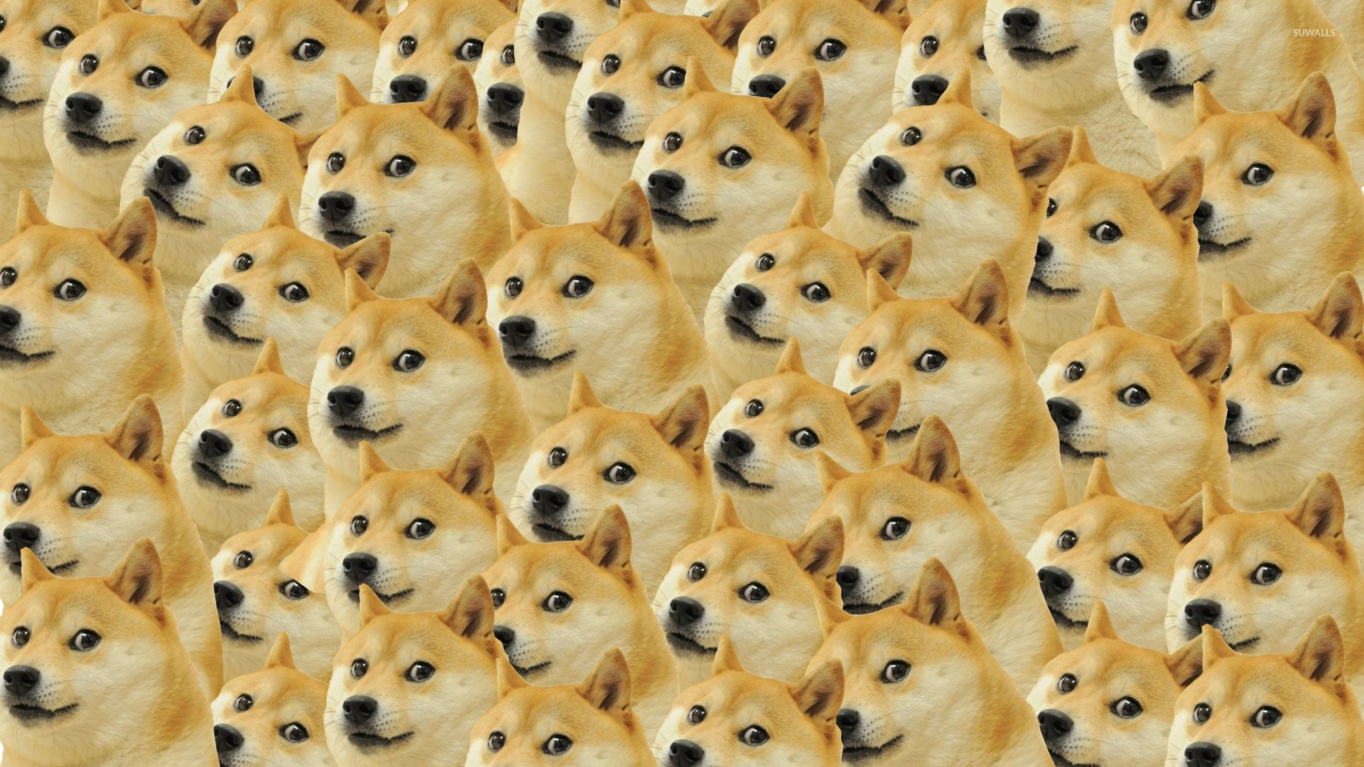 Doge pattern wallpaper   Meme wallpapers   27481 1920x1080