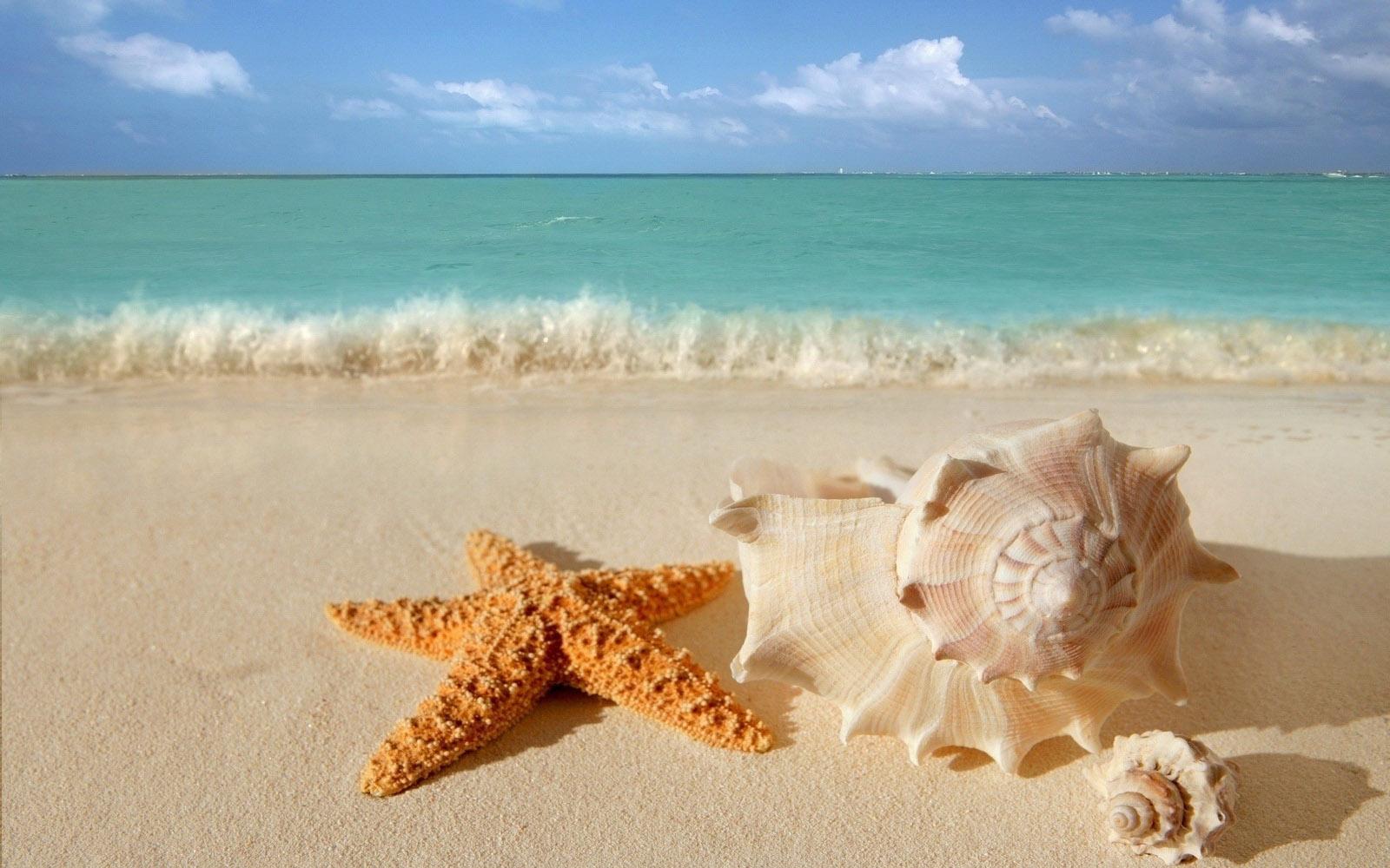 starfish seashells beach sand wallpaper   View All 1600x1000
