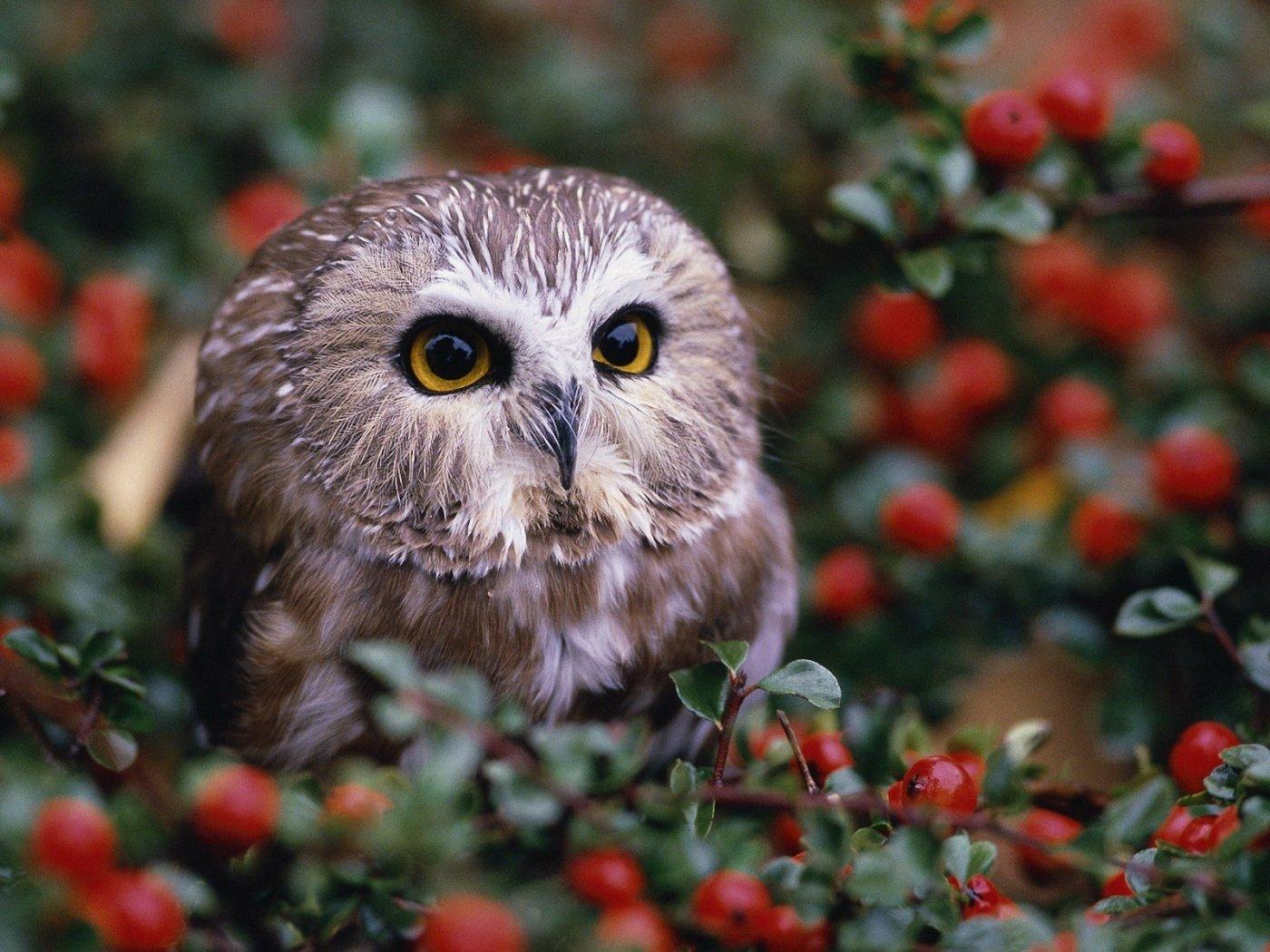 74 Free Owl Wallpaper On Wallpapersafari