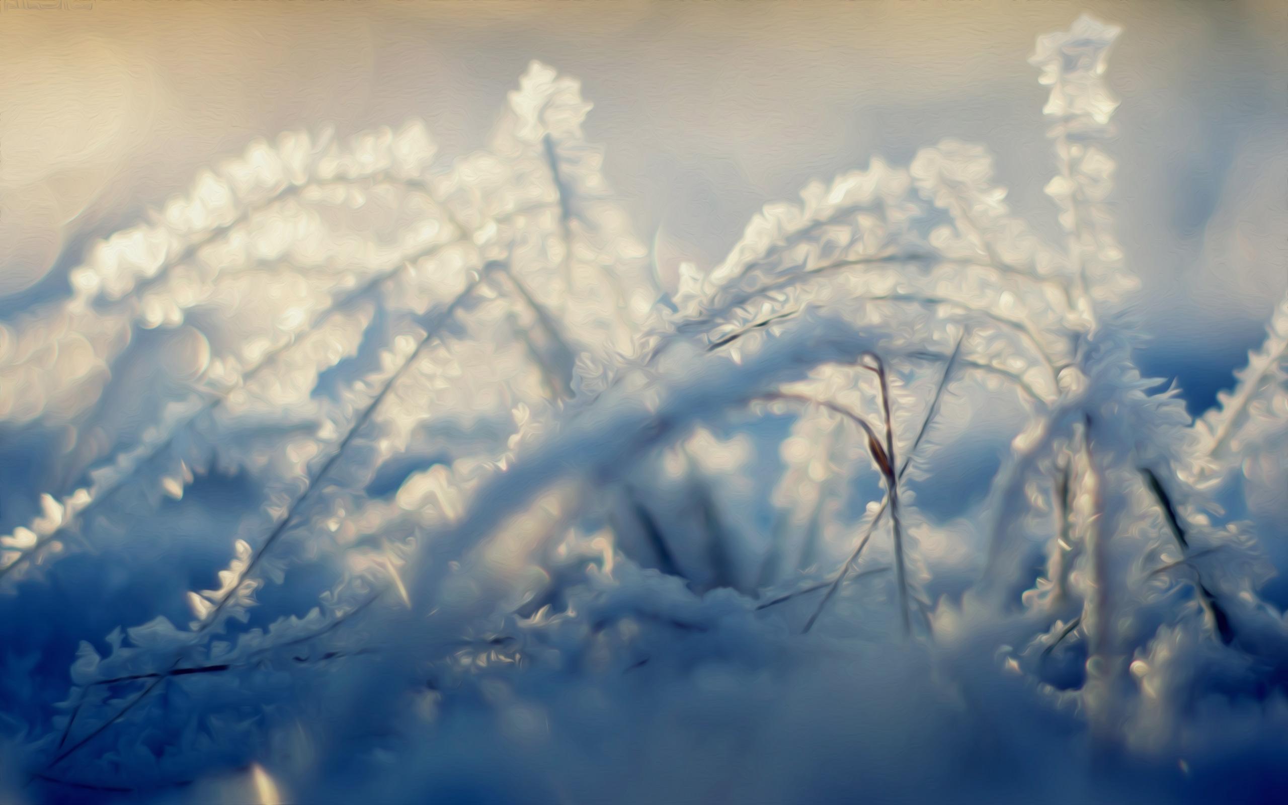 winter snow scene wallpapers   wwwhigh definition wallpapercom 2560x1600