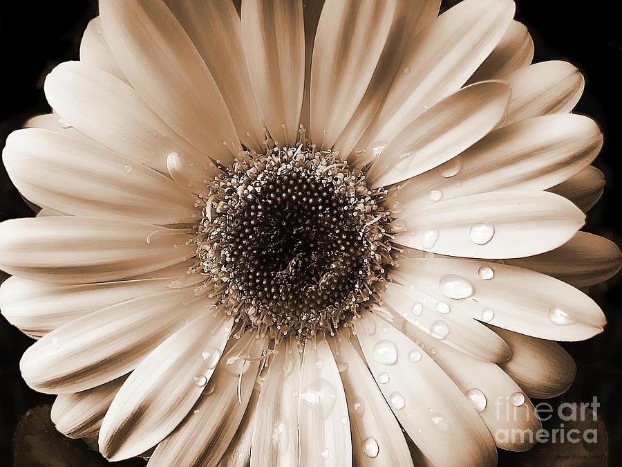 Beautiful Wallpapers gerbera and daisy flower wallpaper 900x675
