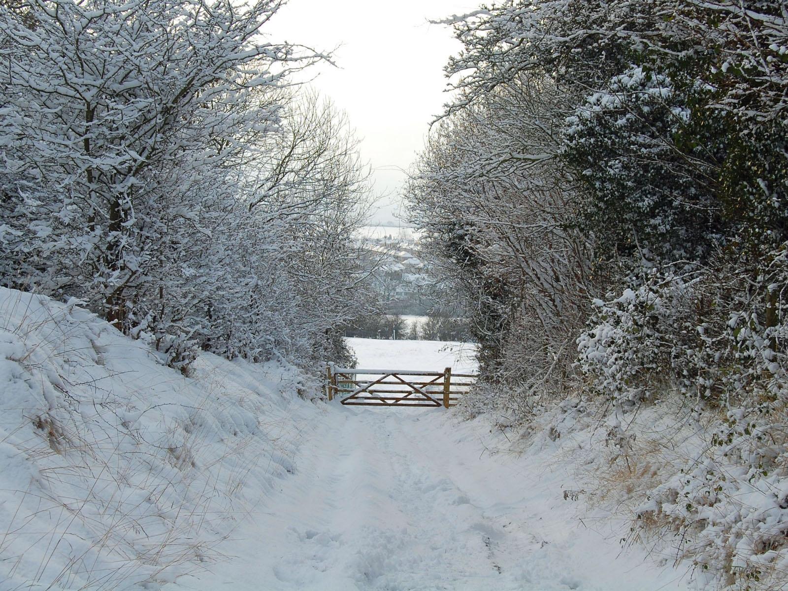 Winter Scenes Wallpaper Free Download | wallpaper, wallpaper hd ...