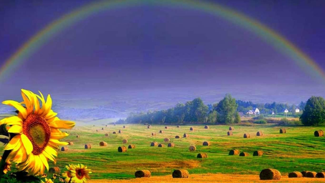 40+ Rainbow Sunshine Wallpapers on WallpaperSafari