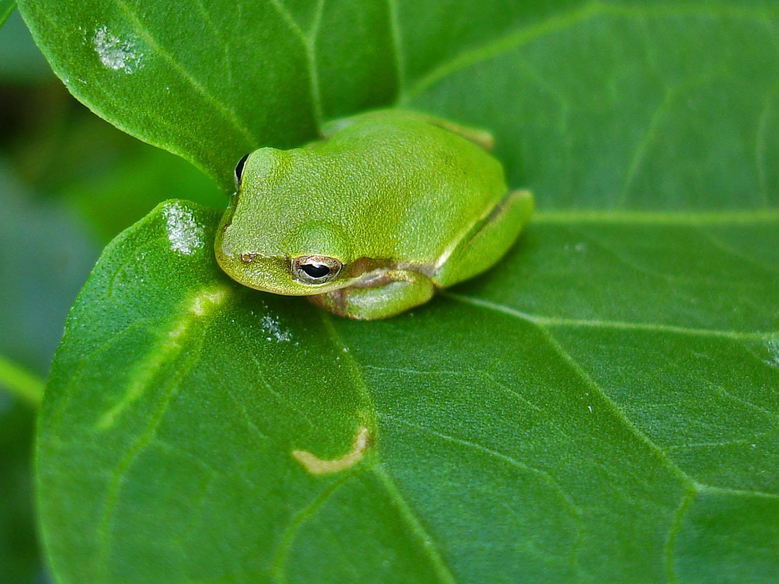 Cute Frogs Wallpaper Cute desktop backgrounds 1600x1200