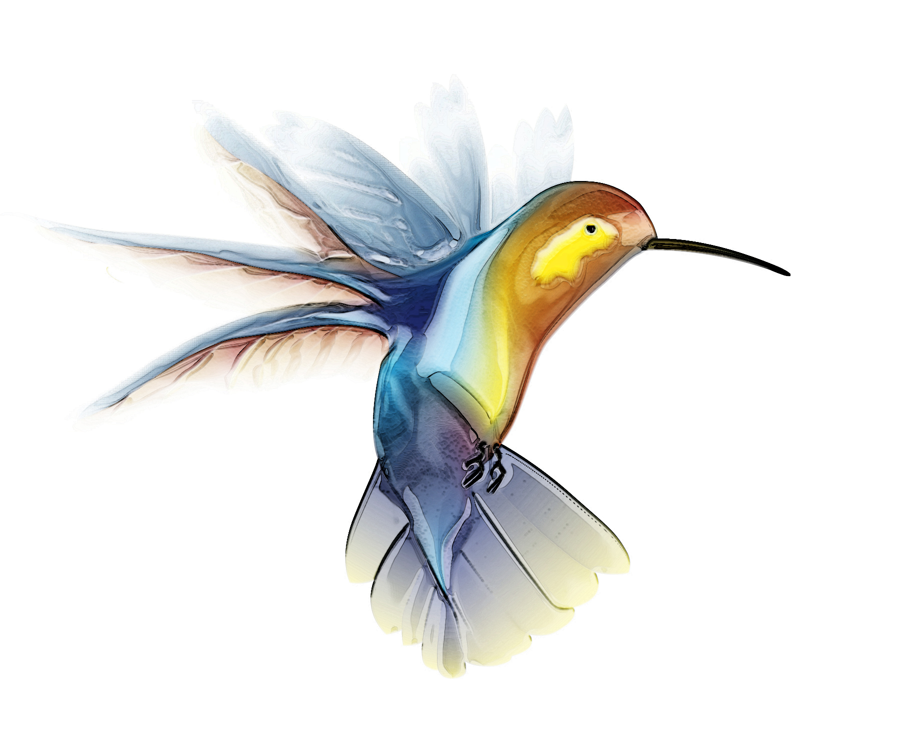 animated hummingbird wallpaper wallpapersafari