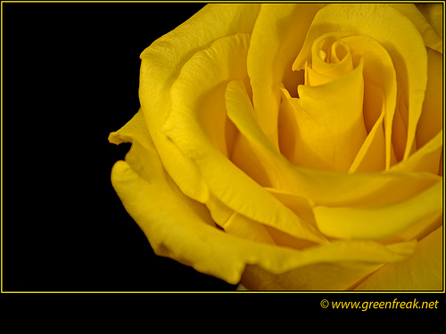 the yellow wallpaper symbolism Right click on the image and 500x375