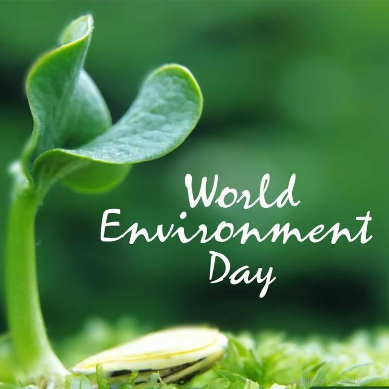 World Environment Day Pictures Images Graphics   Page 2 768x768