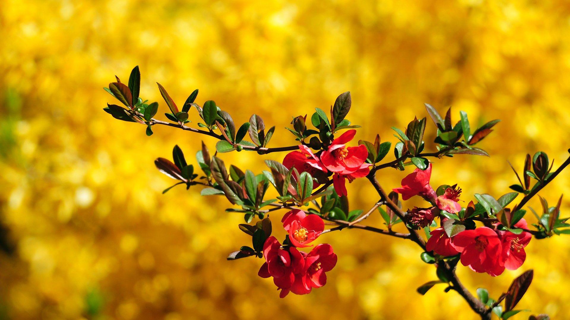 HD Spring Flowers Wallpaper Animal Desktop Pictures 1920x1080
