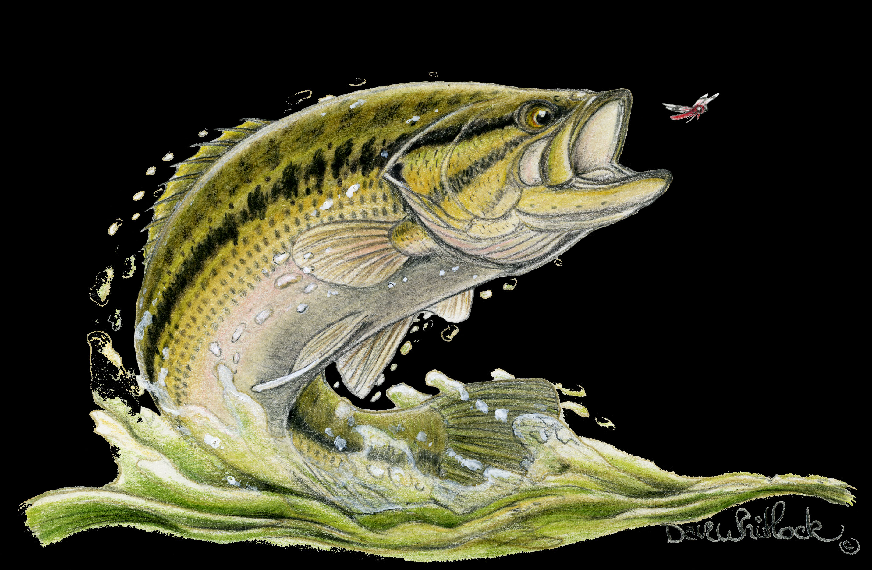 Largemouth Bass Backgrounds 2862x1872