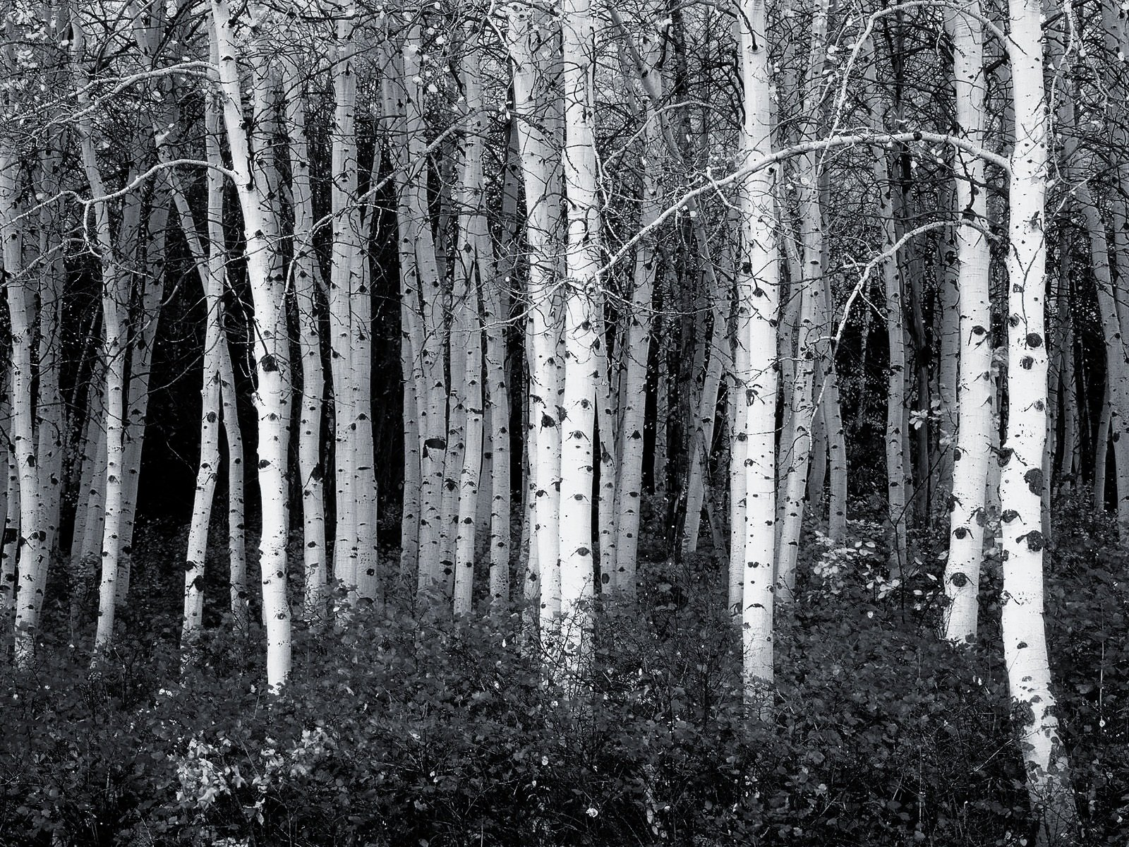 Black And White Forest Photography 40 black and white wallpapers 1600x1200
