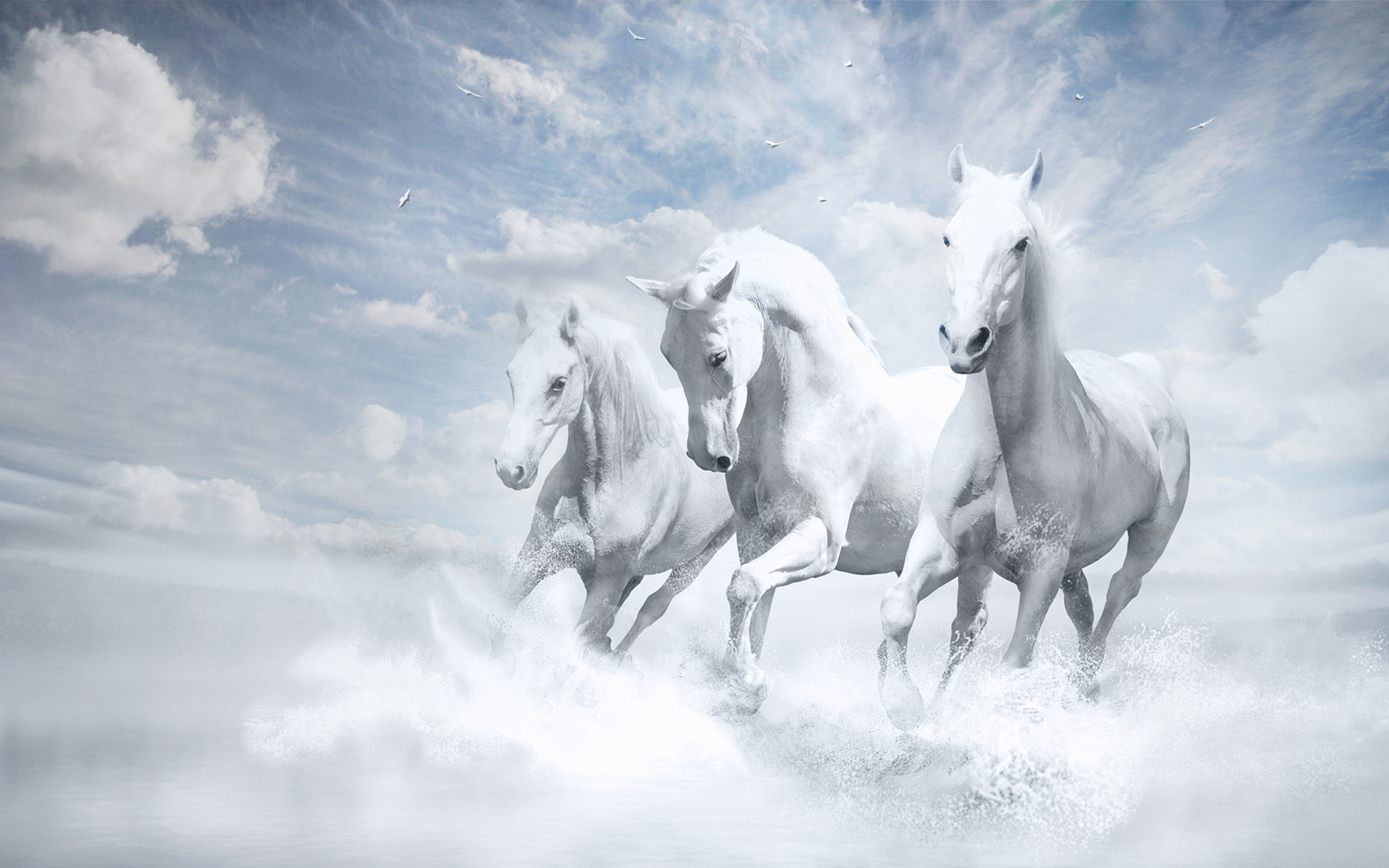 Free Download White Horses Wallpapers Hd Wallpapers 1920x1200