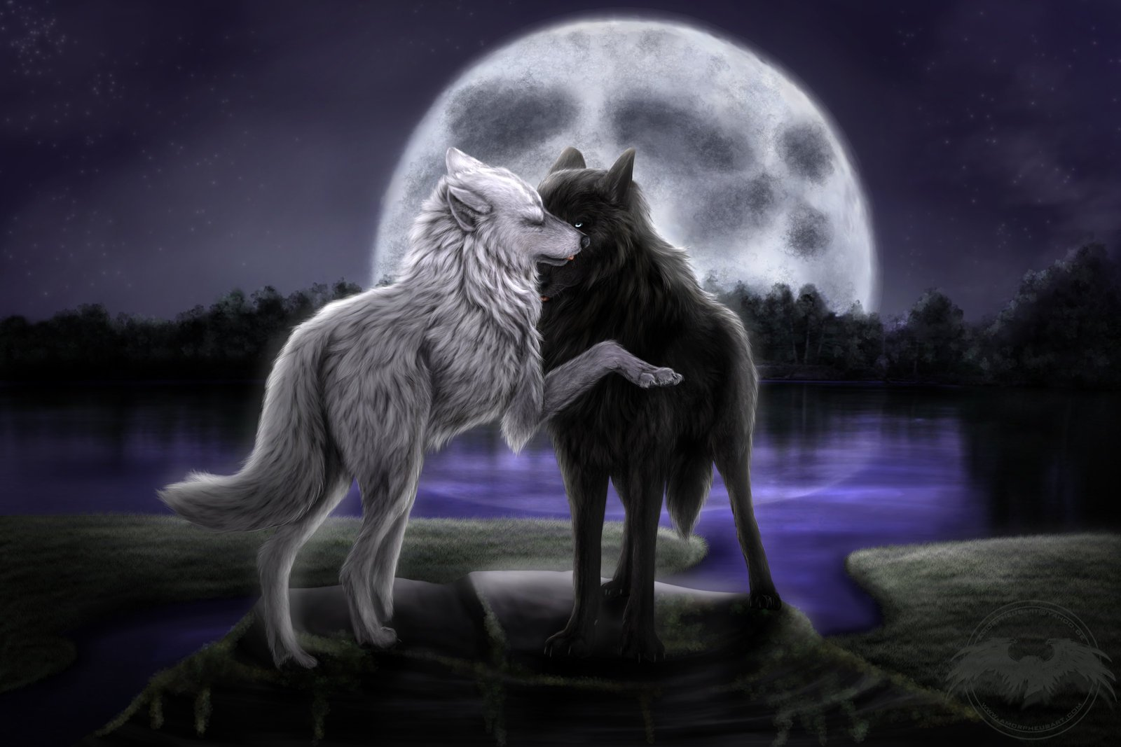 Wolves in Love Wallpapers - WallpaperSafari