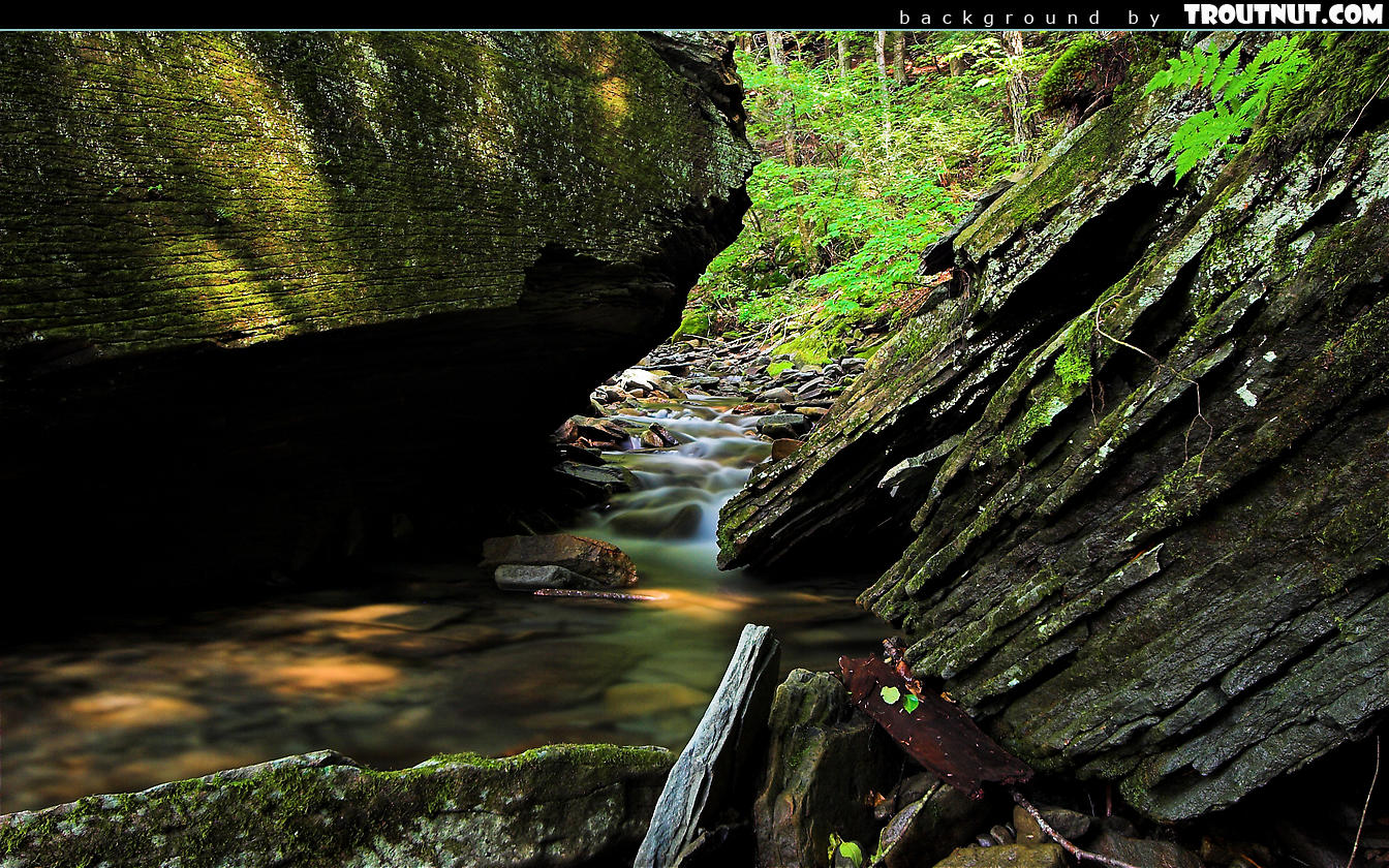 Desktop Backgrounds Hi res Nature Photography Page 2 1344x840