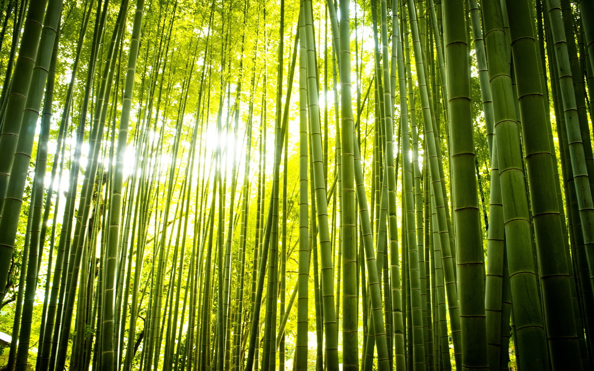 Bamboo Computer Wallpapers Desktop Backgrounds 1920x1200 ID 1920x1200