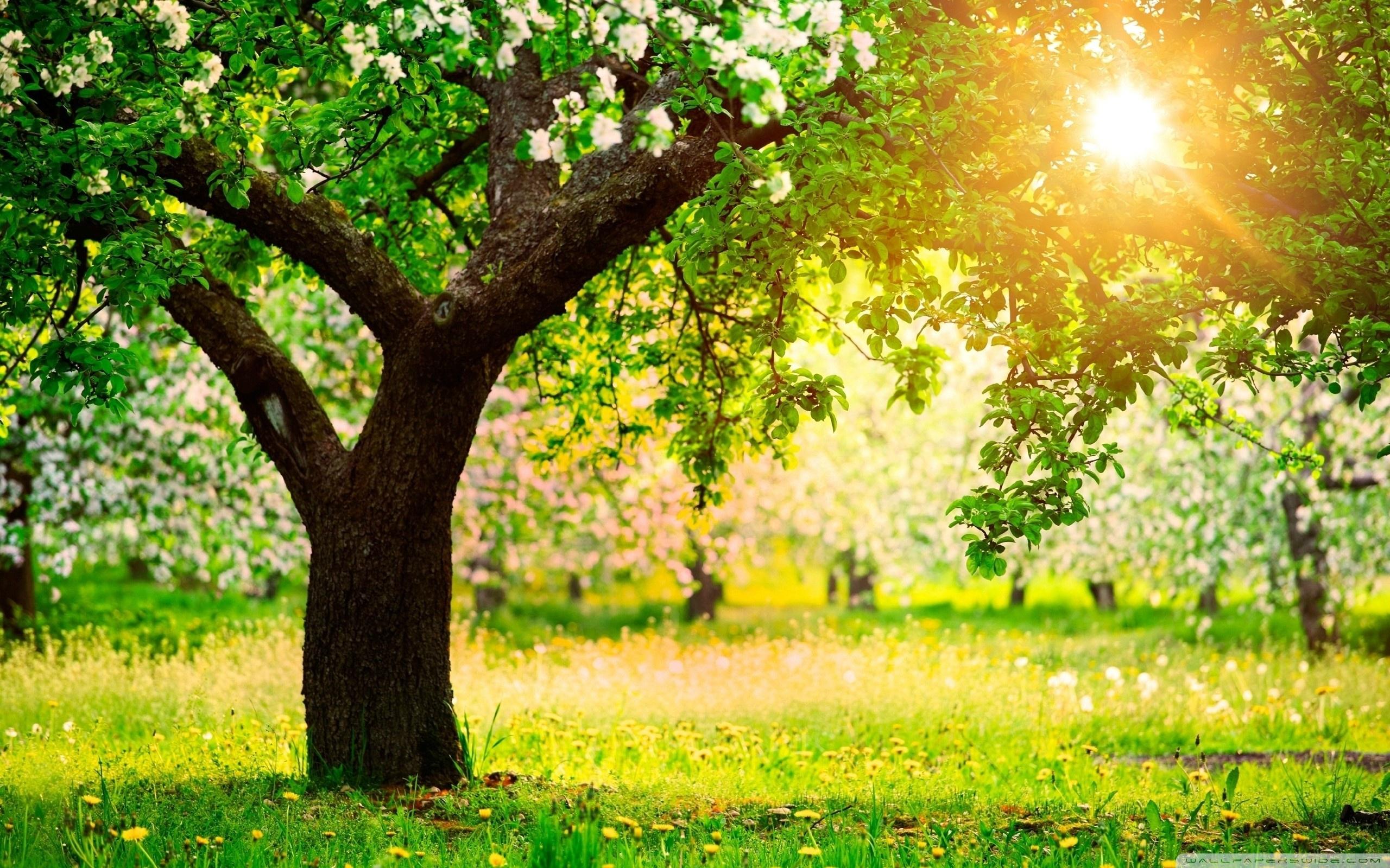 One Sunny Spring Day Telasm 4K HD Desktop Wallpaper for 4K 2560x1600