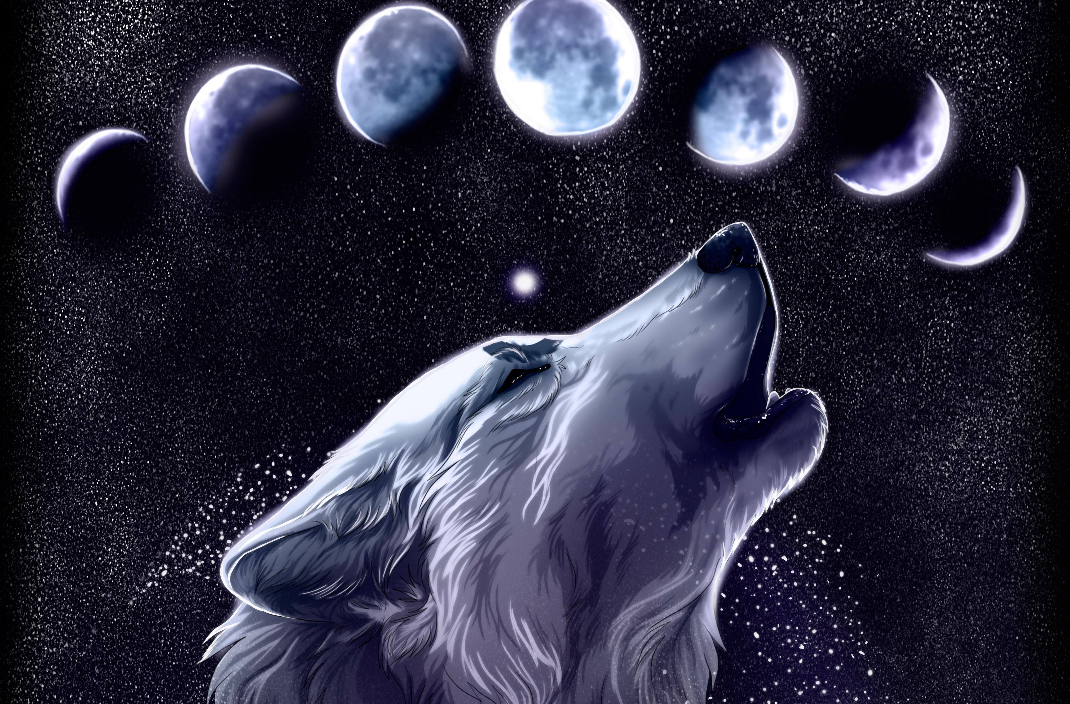 wolf art wallpaper   ForWallpapercom 3500x2304
