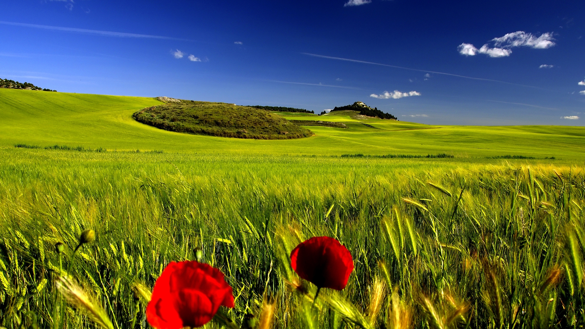 Open Field with Clear Skies Full 1080p Ultra HD Wallpapers 1920x1080