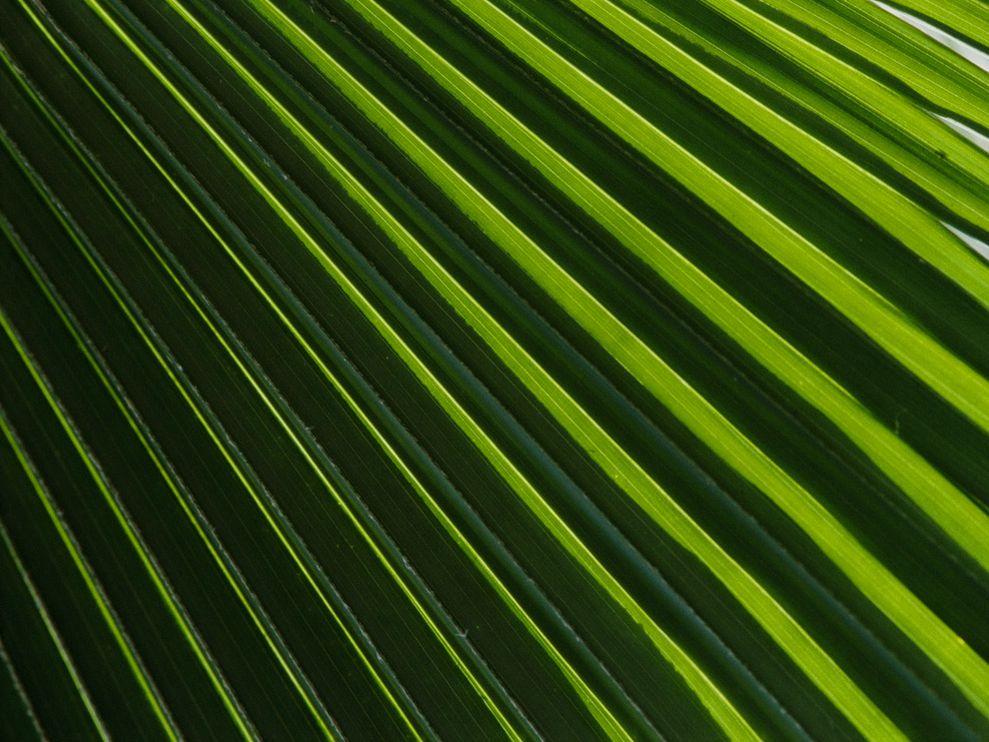 palm frond wallpaper wallpapersafari