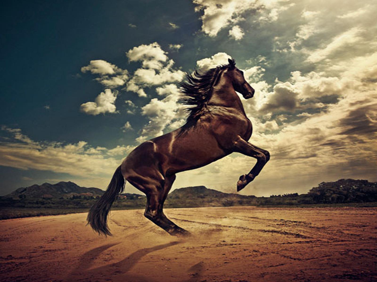 White horse swimming in the blue sea desktop wallpaper 1600x1200