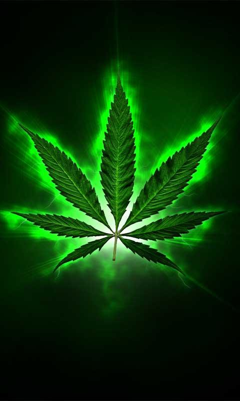 3d <b>weed leaf wallpaper</b>