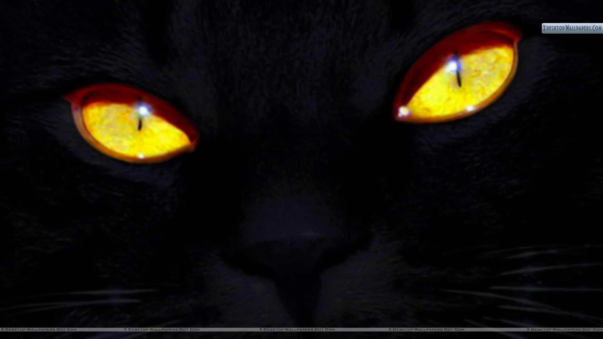 Black Cat Eyes Wallpaper 1920x1080