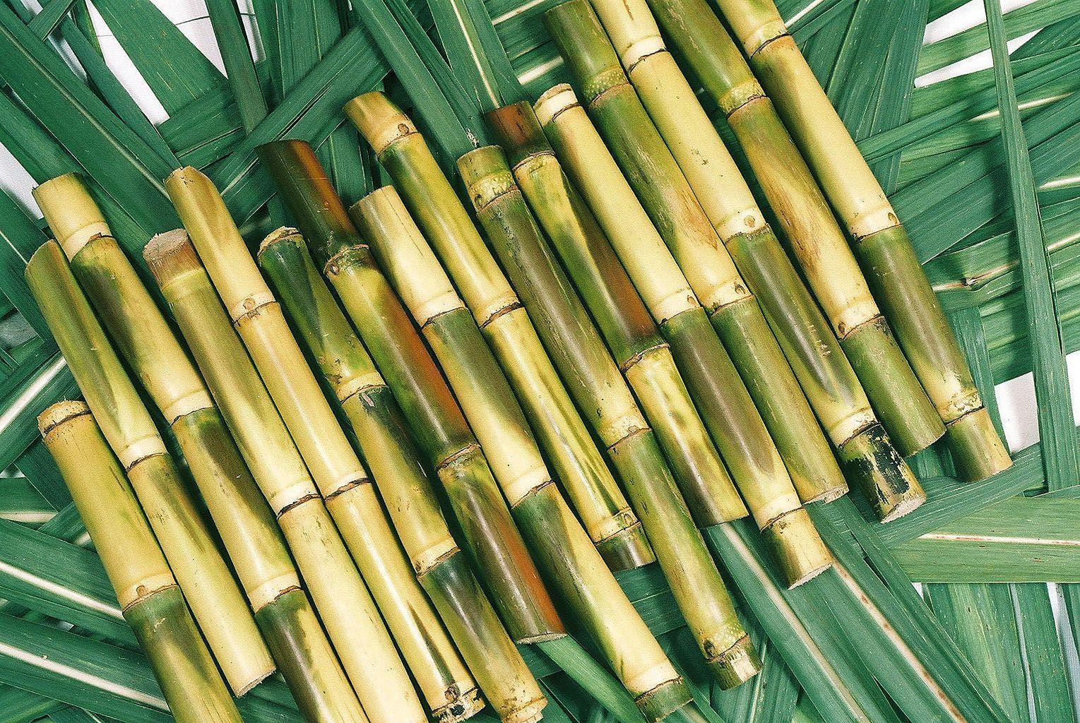 Sugarcane Wallpapers 1529x1024