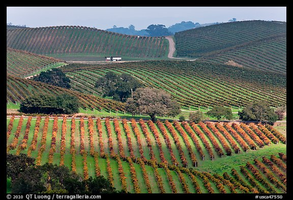 Wine country scenery in Carneros Valley Napa Valley California USA 576x393