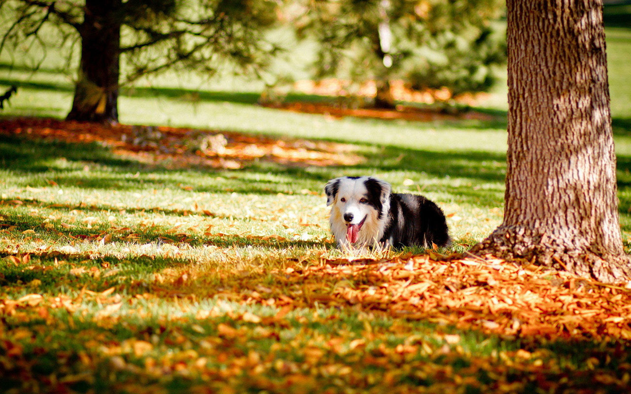 Autumn season wallpaper cute dog photography 8 Animal Wallpapers 1280x800