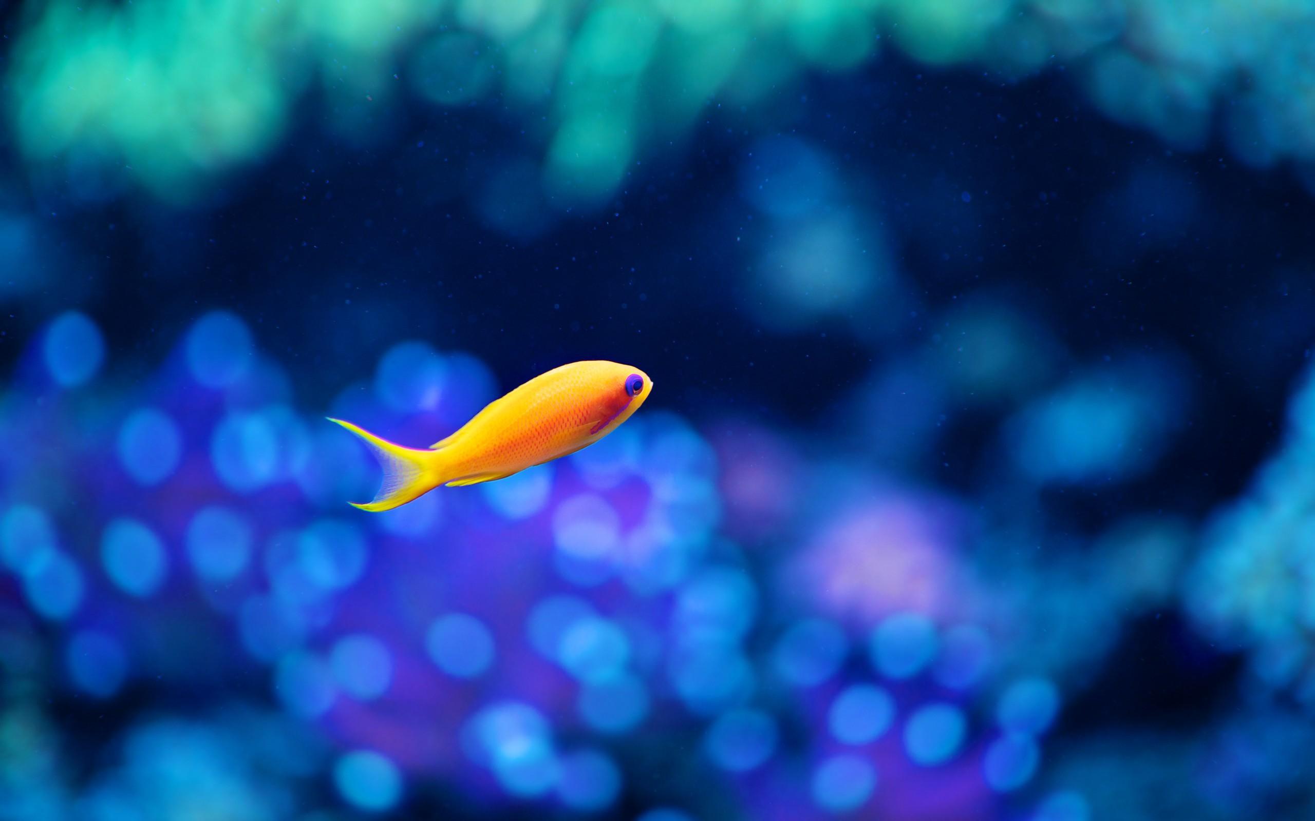 Желтая рыбка  № 1707606 загрузить