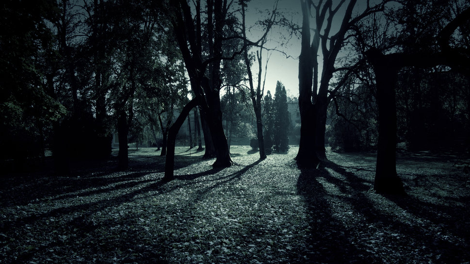 Dark Forest Shadows wallpaper   ForWallpapercom 969x544