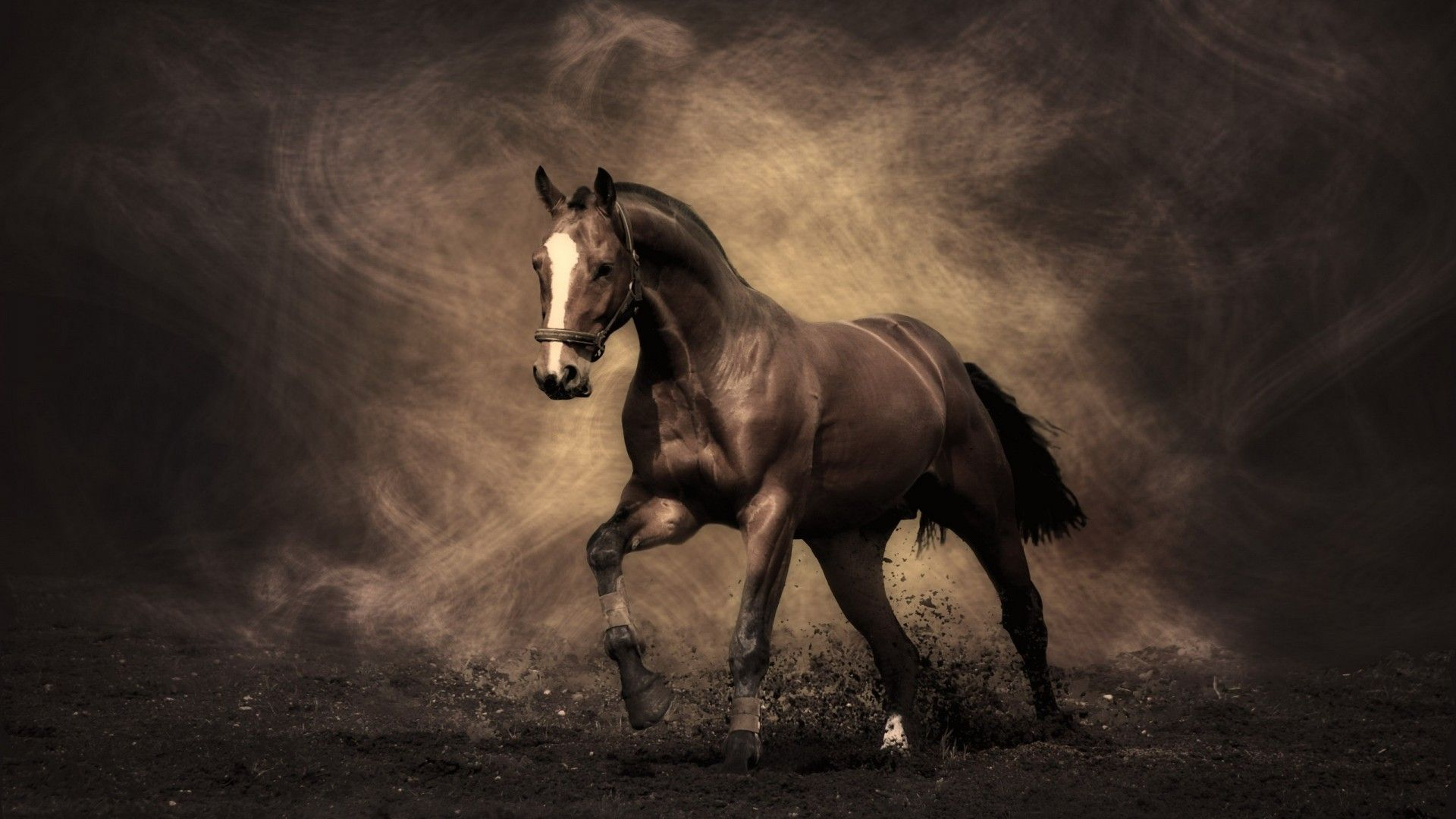Free Download Horse Backgrounds For Your Computer 1920x1080 For