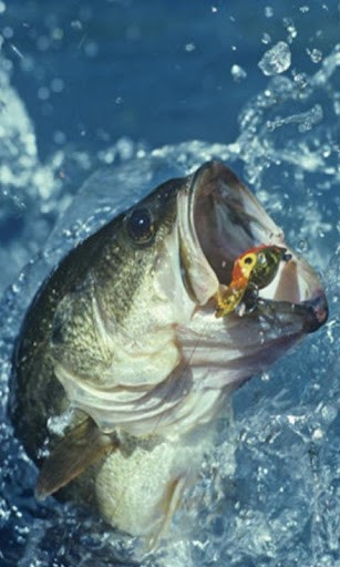 Bass Fishing Wallpaper For Iphone bass fish live wallpaper for 307x512