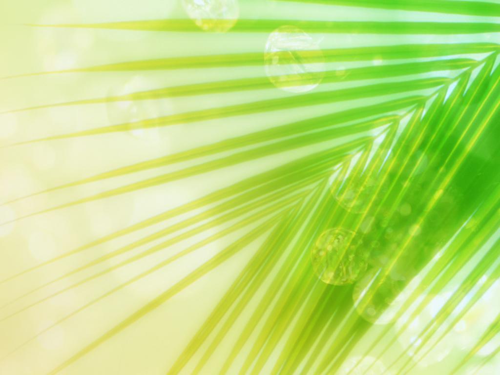 Palm Leaf Background 6855128 1024x768