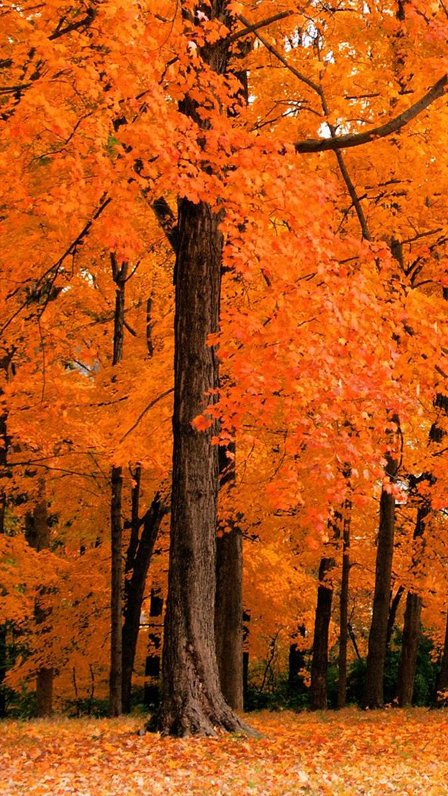 49 Fall Leaves Wallpaper Iphone On Wallpapersafari