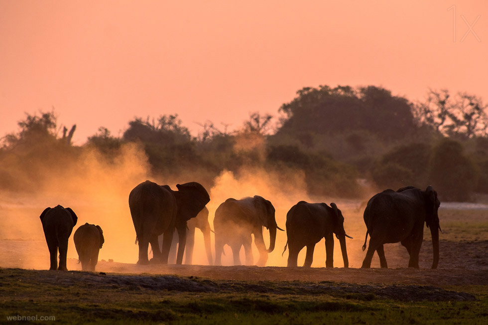 elephant wildlife photo by andrew schoeman 13 980x652