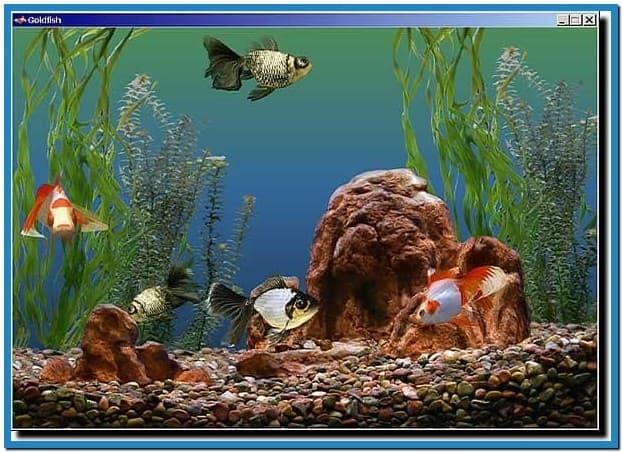 aquarium wallpapers and screensavers wallpapersafari