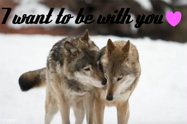 Wolves in love wallpapers wallpapersafari - Anime wolves in love ...