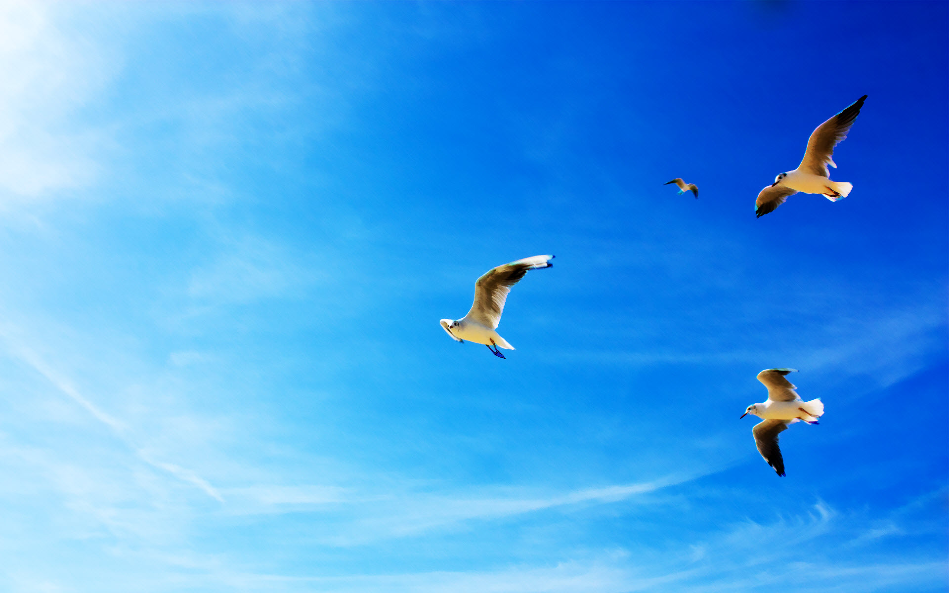 Seagulls in Flight Wallpapers HD Wallpapers 1920x1200