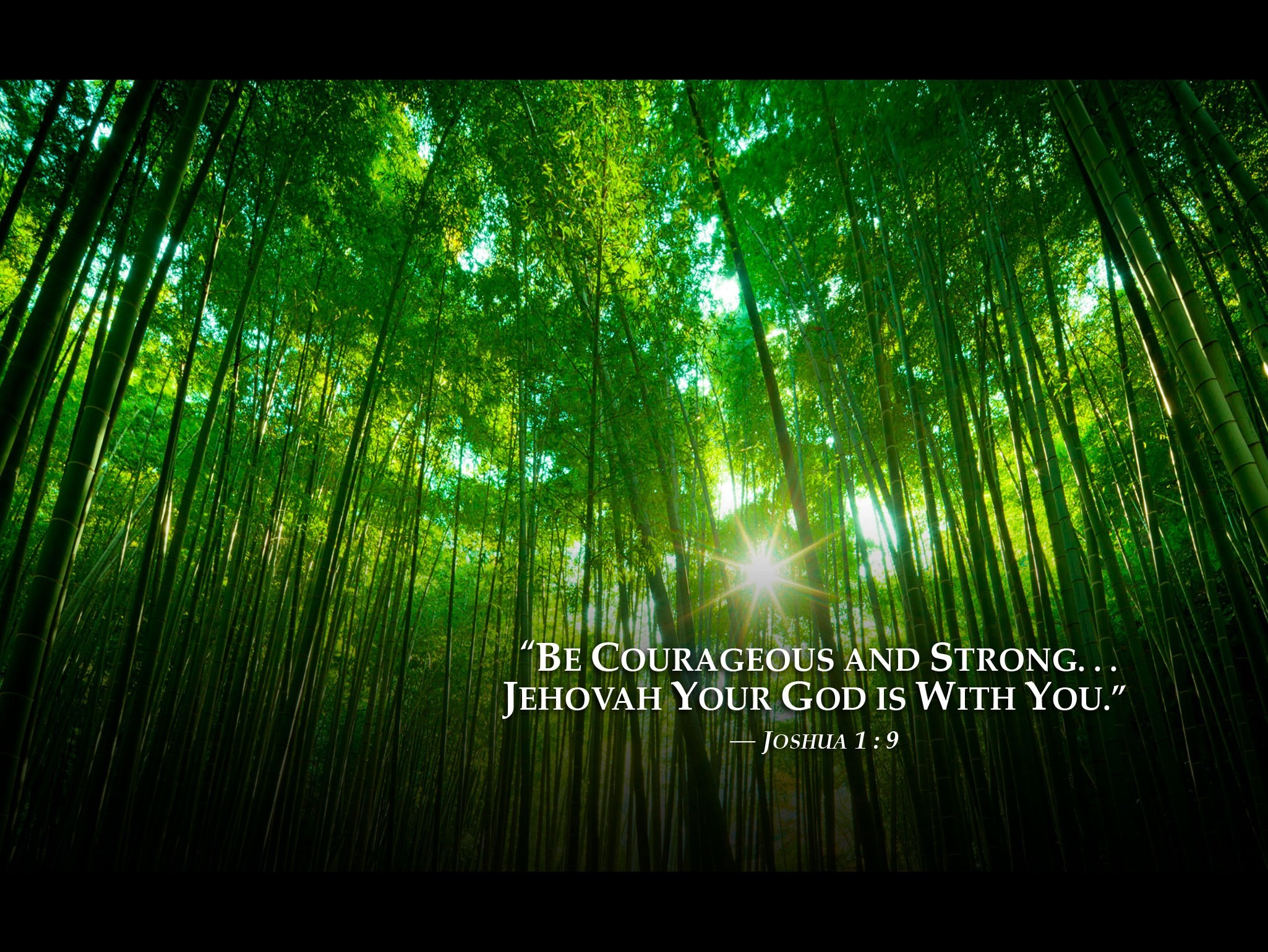 Jehovahs Witnesses Wallpaper 69 images 2050x1540