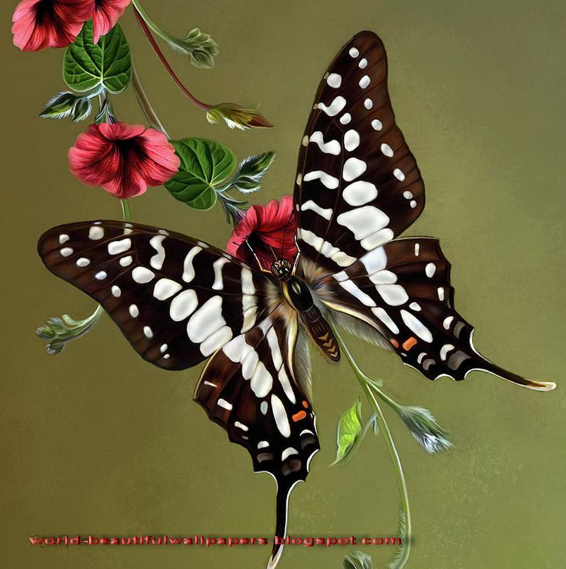 Beautiful Wallpapers Beautiful Butterflies Wallpaper 806x810