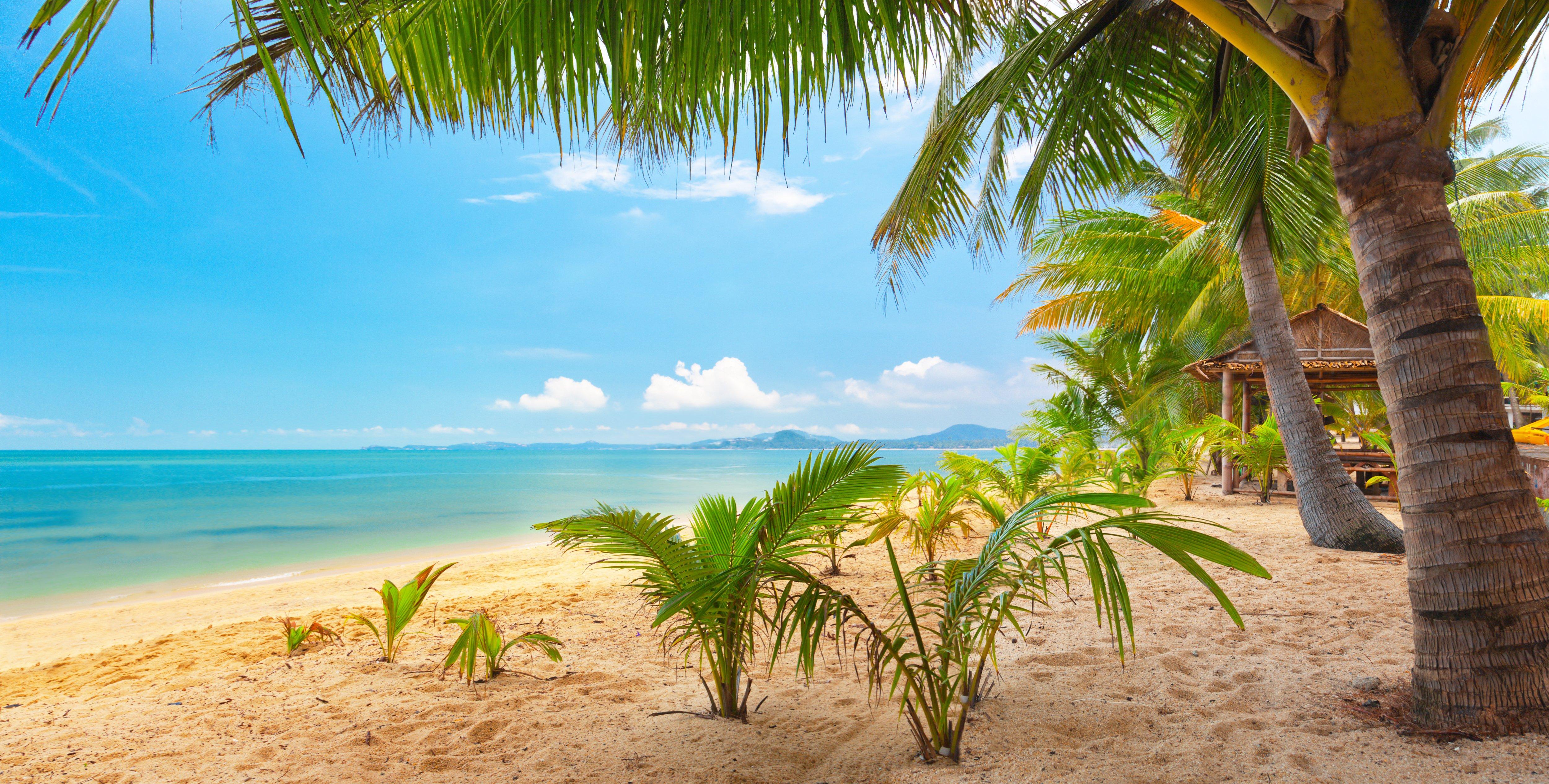 Sand sea sky palm trees nature tropical landscape beautiful wallpaper 5000x2532