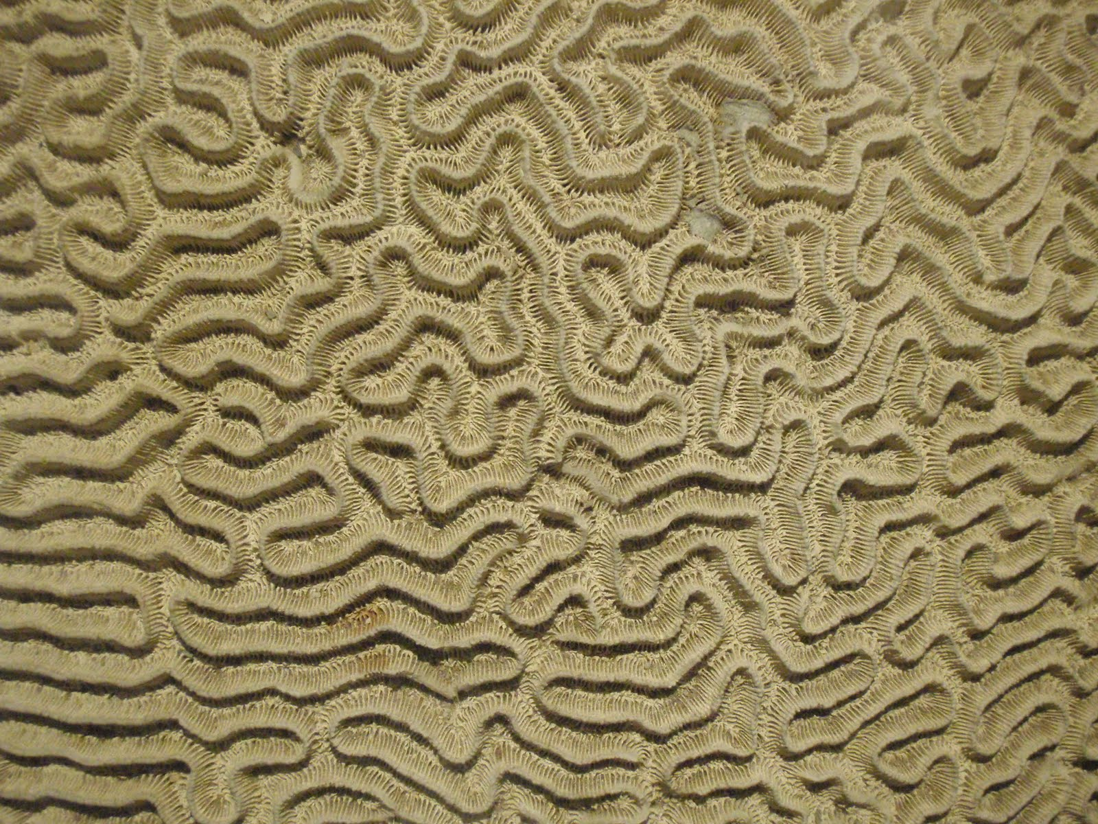 Coral Color Wallpaper Coral Color Wallpaper Patterns Coral Print 1600x1200