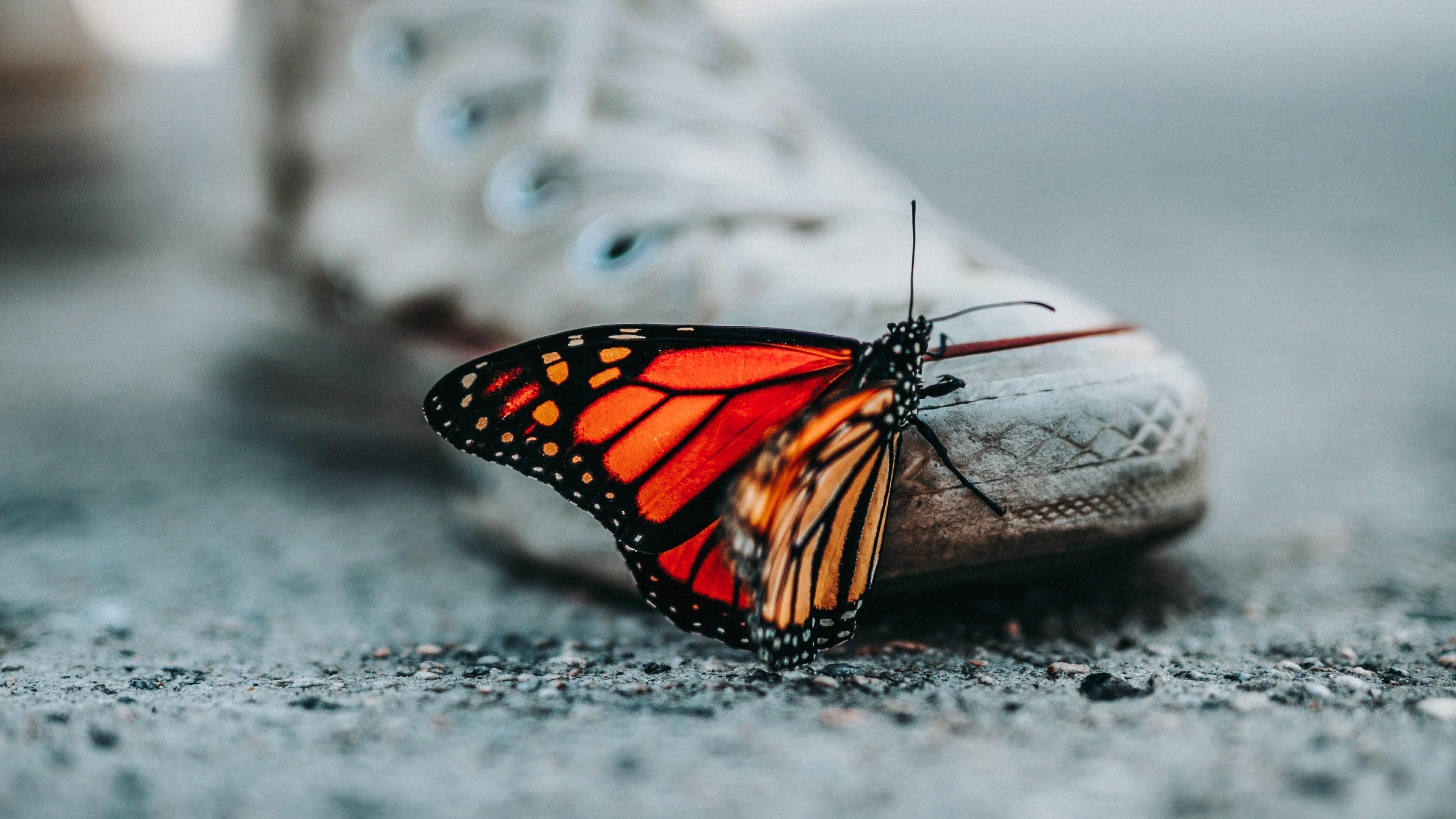 Cute Butterfly on Shoes 4K Wallpaper HD Wallpapers 3840x2160