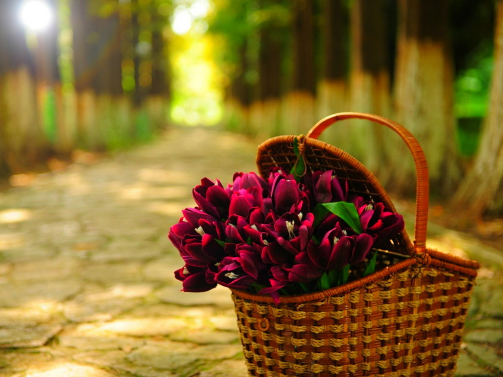 Tulips Flowers Basket One HD Wallpaper Pictures Backgrounds FREE 1024x768