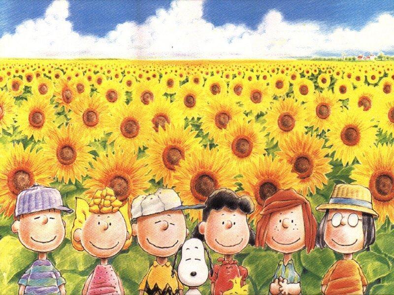 peanuts in sunflower meadow   Peanuts Wallpaper 6273371 800x600