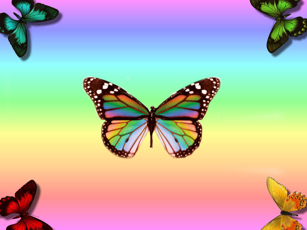 WnP Wallpapers Pictures Rainbow Wallpapers Beautiful Butterfly 1024x768